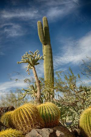 Desert Botanical Garden - Phoenix, Arizona