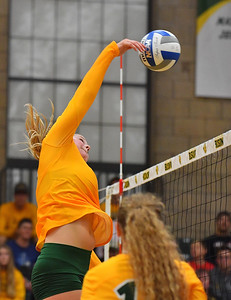 FARGO, NORTH DAKOTA - SEPTEMBER 13, 2019:  Bella Lien #8 of the North Dakota State Bison attacks a ball against the Cal Bears during their match at the Bentson Bunker Fieldhouse on September 13, 2019 in Fargo, North Dakota. Cal defeated North Dakota State 3-1.  (Photo by Sam Wasson)