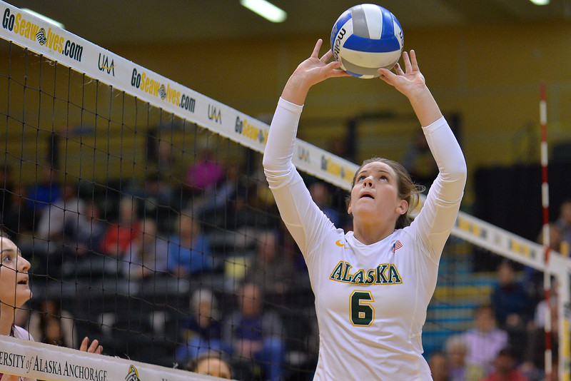 ANCHORAGE, AK - SEPTEMBER 7:  Casey Davenport #6 of the UAA Seawolves sets a ball in a match between the Alaska Anchorage Seawolves and the Chico State Wildcats at the Alaska Airlines Center in Anchorage, Alaska.  The Seawolves won 3-1.  (Photo by Sam Wasson)