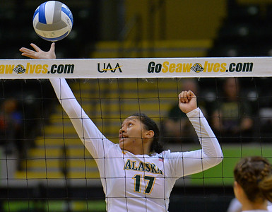 ANCHORAGE, AK - SEPTEMBER 7:  Diana Fa'amausili #17 of the UAA Seawolves taps a ball in a match between the Alaska Anchorage Seawolves and the Chico State Wildcats at the Alaska Airlines Center in Anchorage, Alaska. The Seawolves won 3-1.  (Photo by Sam Wasson)