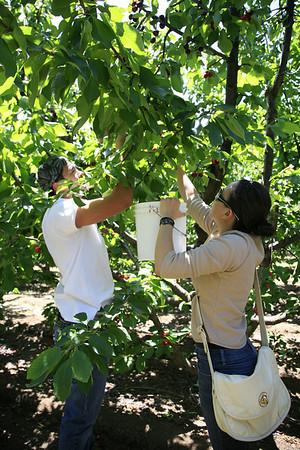 2010-05-30 Cherry Picking