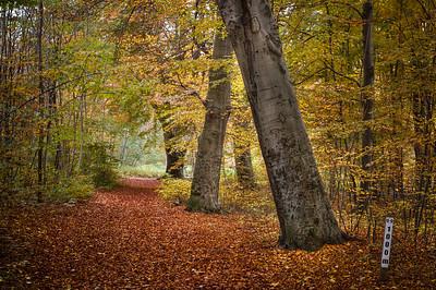 Tusenmeterskogen