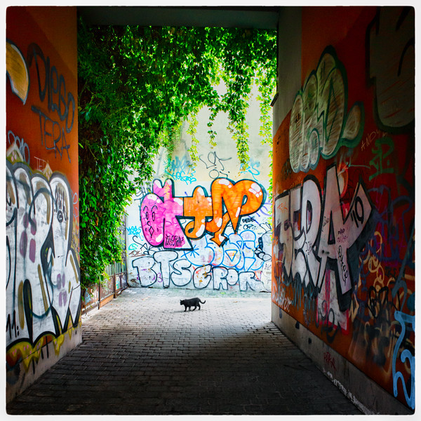 Urban jungle...