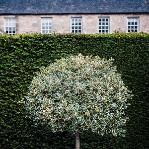 Petit jardin à l'écossaise