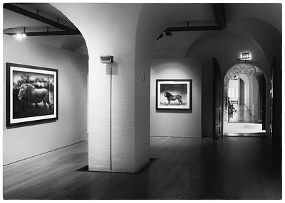 Nick Brandt utstilling - Preus Museum