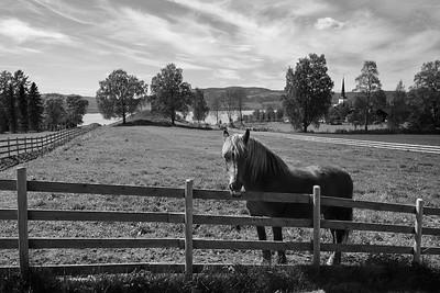 Hesten på Sveinhaug gård