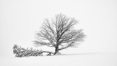 La généalogie illustrée : la mauvaise branche