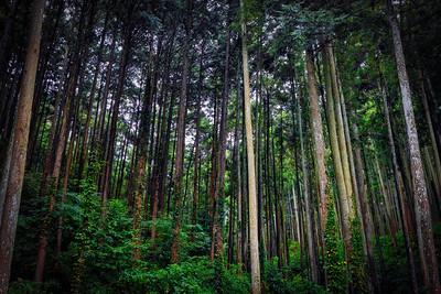 Odawara Forest
