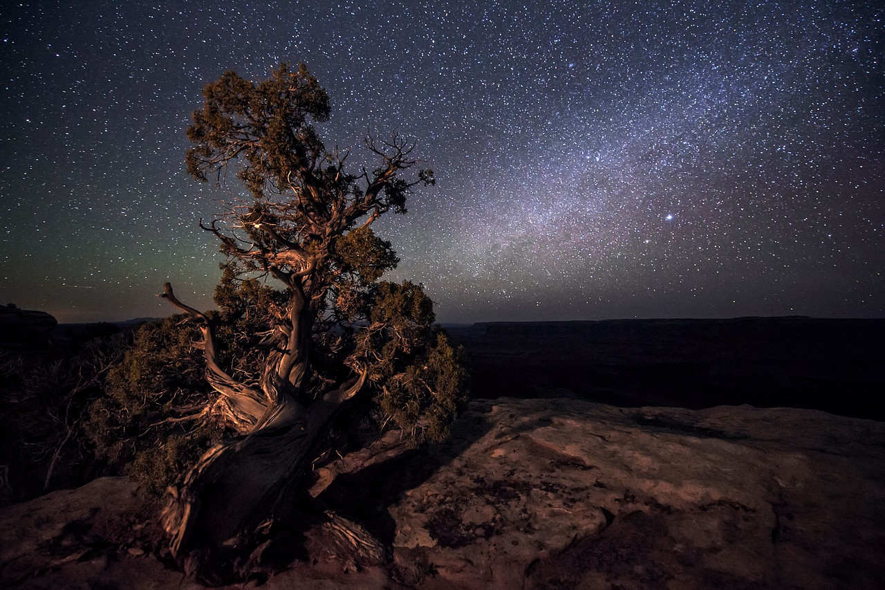 A Juniper snag and the Milky Way at Dead Horse Point State Park near Moab, Utah.