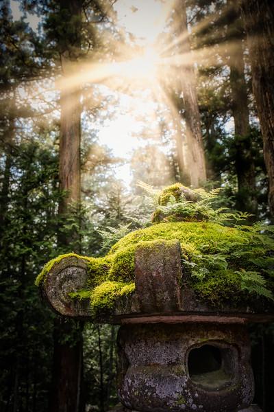 Toshogu Shrine Forest