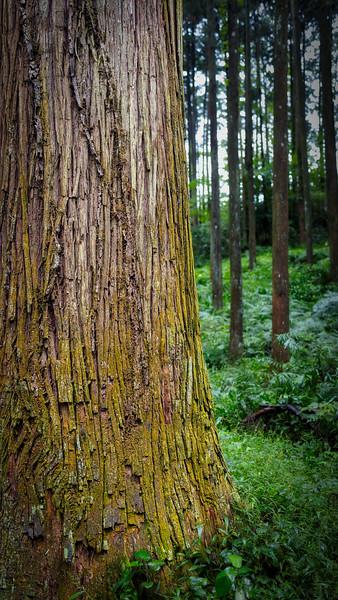 Odawara Forest 5