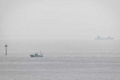 Bay Fog