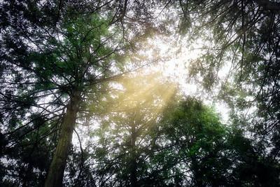 Odawara Forest 3