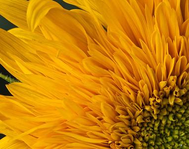 If_I_Were_a_Sunflower_2010
