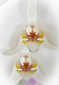 The_Sorcery_of_Orchids_2011-2