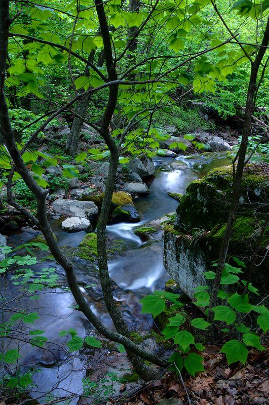 Fisher's Gap, Shenandoah National Park, May 15, 2005