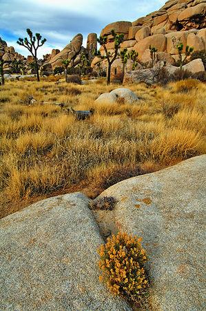 Joshua Tree National Park, CA, December 27, 2005