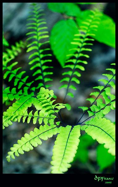Shenandoah National Park, VA, May 27-28, 2006