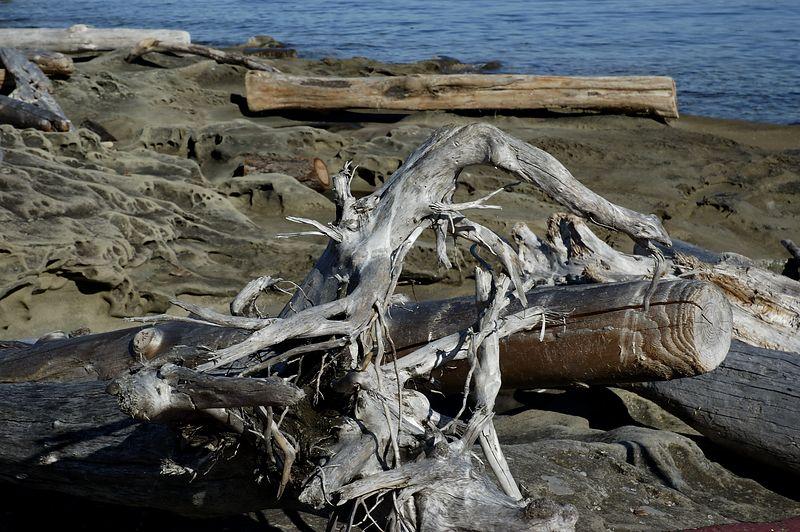 Mother Nature's Beach Art