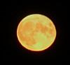 Moon Crop