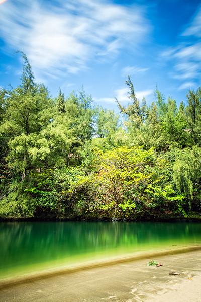 Tree Ref Kauai