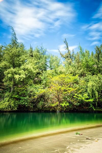 Web Tree Ref Kauai