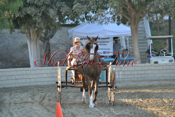 Carriage Driving Gallery 4