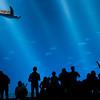 The Open Water Exhibit, Monterey Bay Aquarium, CA