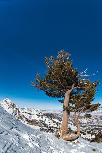 Lone Pine Ryan-9027