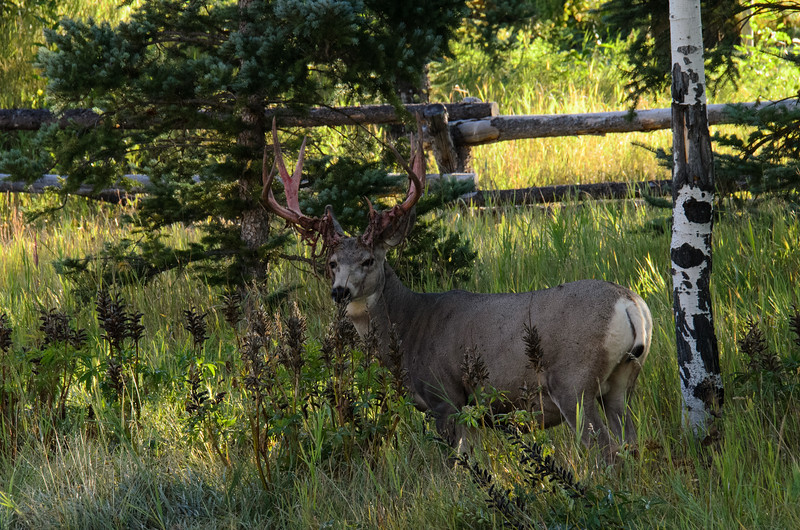 Just hanging out in the yard....<br /> Jackson Hole, WY.  Labor Day weekend, 2015.