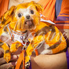 clemson-tiger-band-preseason-camp-2014-169