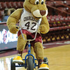 College of Charleston Mascot prior to an NCAA basketball game between UNCG Spartans and the College of Charleston Cougars, Saturday Feb 2, 2013 at TD Arena. (Shane Roper/Special to The Post and Courier)
