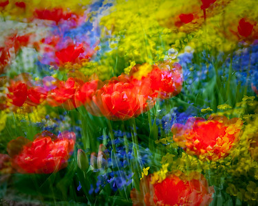 Spring's Movement