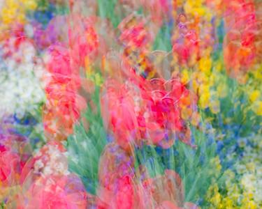 Spring's Innocense