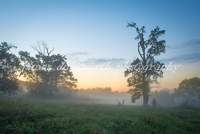 Nash Farm Fog