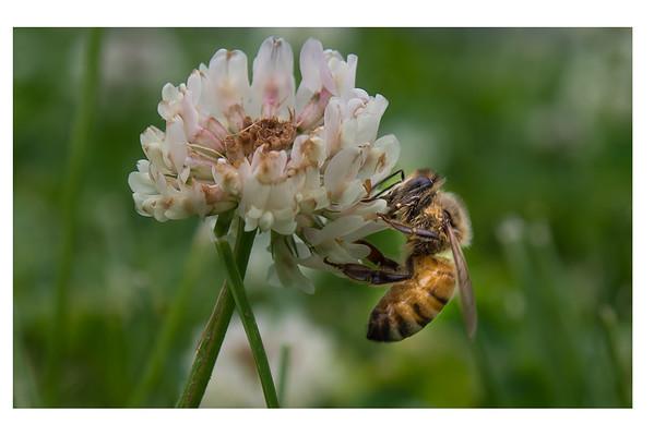 HoneyBeeTwo