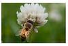 HoneyBeeOne