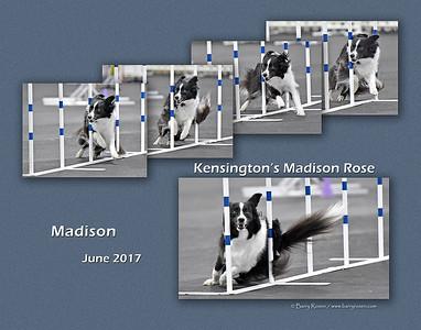 Lohsen 11x Madison weave montage