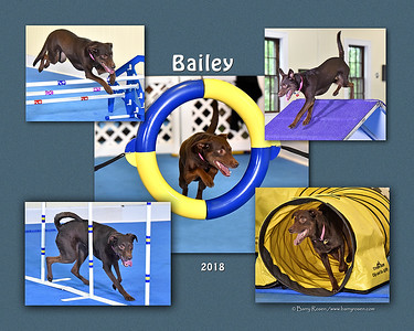Mascarenhas 8x 5-photo Bailey montage2