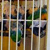 When exotic birds, such as parrots, are held in captivity, they start ripping off their feathers because they start going nuts.