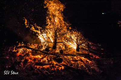 3rd Annual BCN Tree Burn