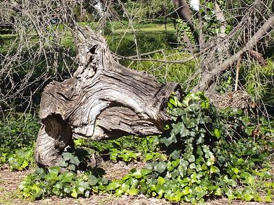 LAAS Meeting - LA County Arboretum and Botanic Garden, Arcadia, CA