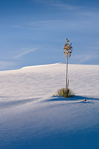 'Stick Pin' - White Sands National Monument, New Mexico