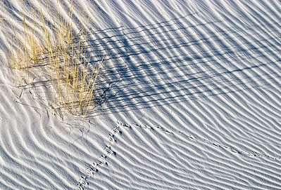 Grasses and White Sands