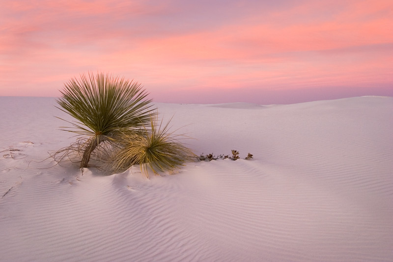 'Desert Survivors' - White Sands National Monument, New Mexico
