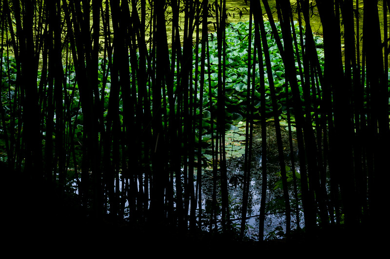 Black Bamboo Forest, Beijing, China