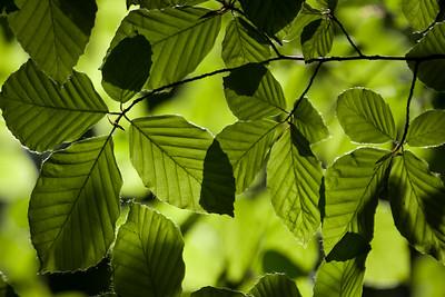 'Overlapping Leaves' - Plitvice National Park, Croatia