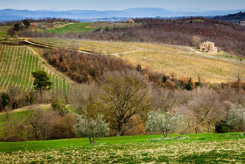 Chianti Estate