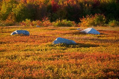 Rocks in Blueberry Bog