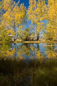 Autumn in Twizel